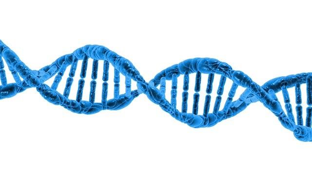 Czym są profile genetyczne