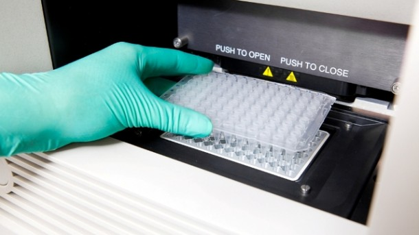 próbka DNA