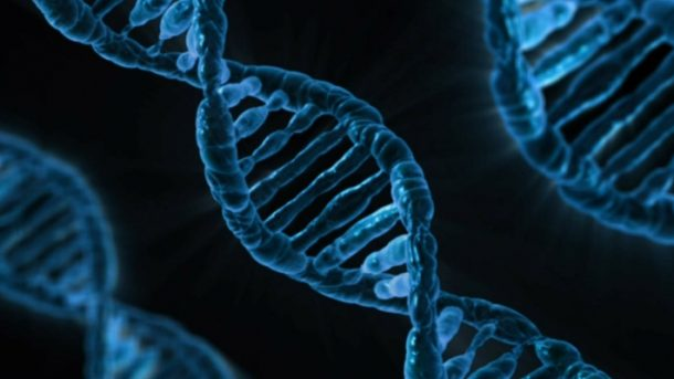 Markery DNA