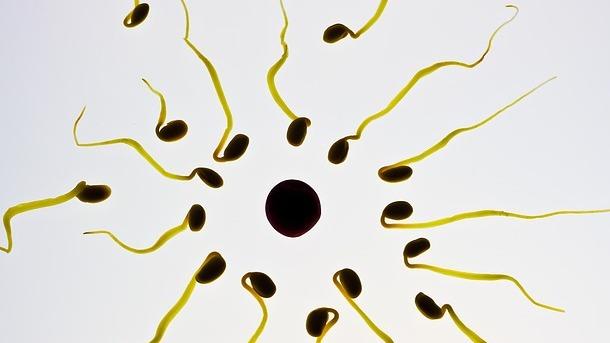 Jak sprawdzić spermę na ubraniu